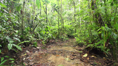 Open muddy clearing in Amazonian Rainforest, Ecuador, during the wet season. Stock Footage