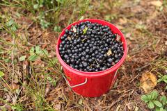 Stock Photo of bucket of blueberries