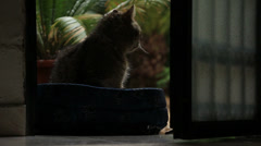 Cat watches rain, then grooms himself Stock Footage