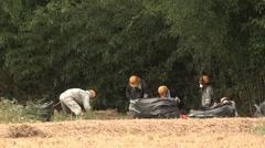 Workers cleaning radioactive soil near Fukushima power plant - stock footage