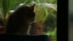 Slow motion cat looking at heavy rain Stock Footage