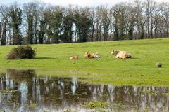 country scene - stock photo
