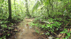 Pool of water on the rainforest floor after very heavy rain, Ecuador. Stock Footage