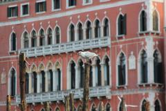 Gulls Venice Stock Photos