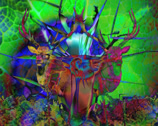 Stock Video Footage of Stag Beetle Acid Swirl