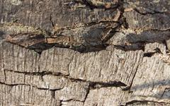 Bark pattern Stock Photos