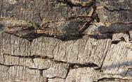 Stock Photo of bark pattern