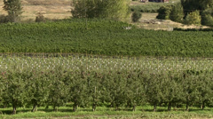 Agriculture,hillside orchards north Okanagan, zoom back Stock Footage