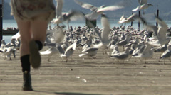 Girl running onto pier, scattering lounging seagulls, long shot Stock Footage
