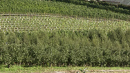Stock Video Footage of hillside partially harvested orchards in north Okanagan, zoom back