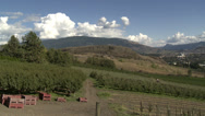 Stock Video Footage of hillside orchards in north Okanagan, partially harvested, pan