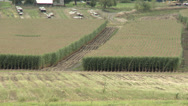 Stock Video Footage of agriculture, partially harvested cornfield long shot