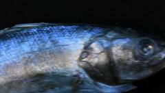 Deep-sea fish 1 Stock Footage