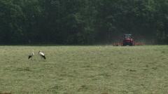 Pair of white storks (ciconia ciconia) in hay field, tractor in background - stock footage