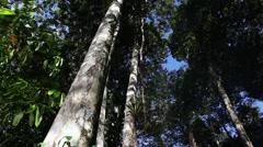 Amazon-Canopy-Brazil Stock Footage
