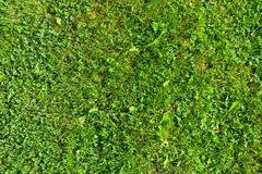 Grass field top view texture Stock Photos