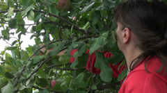 Farmer picking apples, fruits, apple tree, organic orchard, farm, horticulture Stock Footage