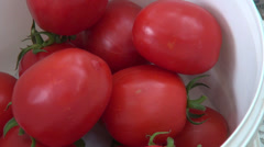 Hands putting ripe plum tomatoes in plastic container, vegetables, gardening Stock Footage