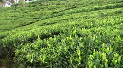 Tea Plantations in the Sri Lankan highlands Stock Footage
