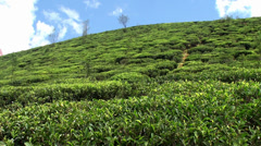 Tea Plantations in the Sri Lankan highlands Stock Footage