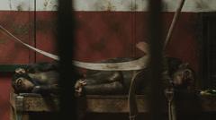 Apes Sleeping Behind Bars 4K Stock Footage