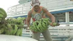 Local man transports bananas fruit export in Brazil Stock Footage