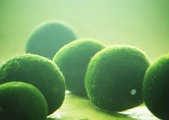 Spherical moss Stock Photos