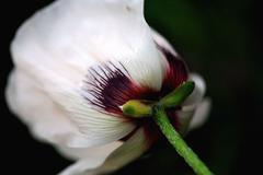 underside of flower - stock photo
