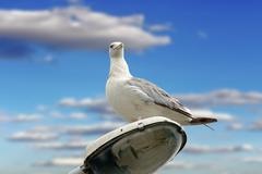 Beautiful gull over cloudy sky Stock Photos