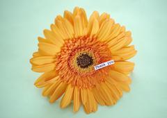 Gerbera daisy with message Stock Photos