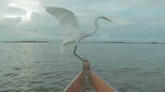 Bird on Boat in Amazon Brazil - stock footage