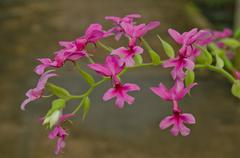Hemophilia is a tropical orchid. - stock photo