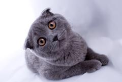 Kitten lays - isolated Stock Photos