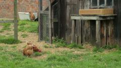 Small holding with chickens and a goat Stock Footage