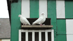 Two white doves at dovecote Stock Footage