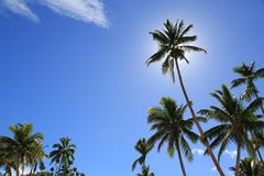 sunny tropical day - stock photo