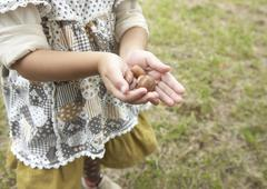 Child's hands holding acorns Stock Photos