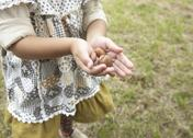 Stock Photo of Child's hands holding acorns