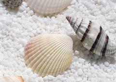 Shellfish Stock Photos
