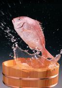 Sea Bream Stock Photos