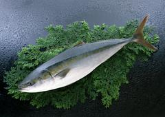 Yellowtail - stock photo