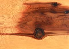 Stock Photo of Nikko Cedar