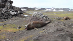 Antarctica, seal. Тюлень морской _5 - stock footage