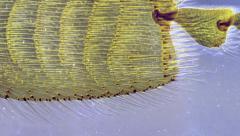 Bee Leg Zoom Stock Footage