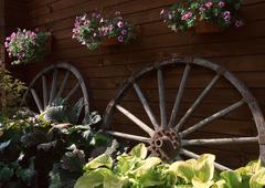 Hanging Basket - stock photo