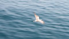 Flying Gull over water Stock Footage