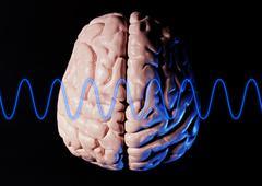 Brain Model Stock Photos