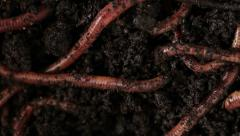 0114 Earthworm Stock Footage