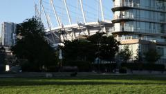 Dogs playing in front of Vancouver stadium Stock Footage