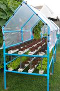 Growing hydroponic vegetables Stock Photos
